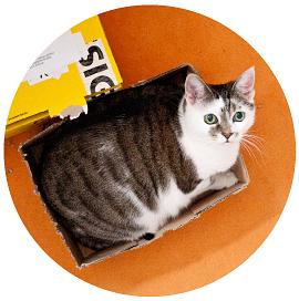 Squarecats-Portrait